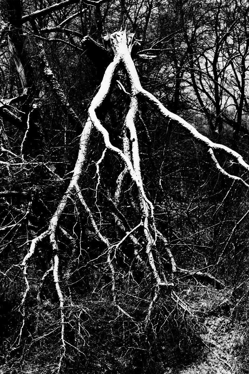 Drzewa v2