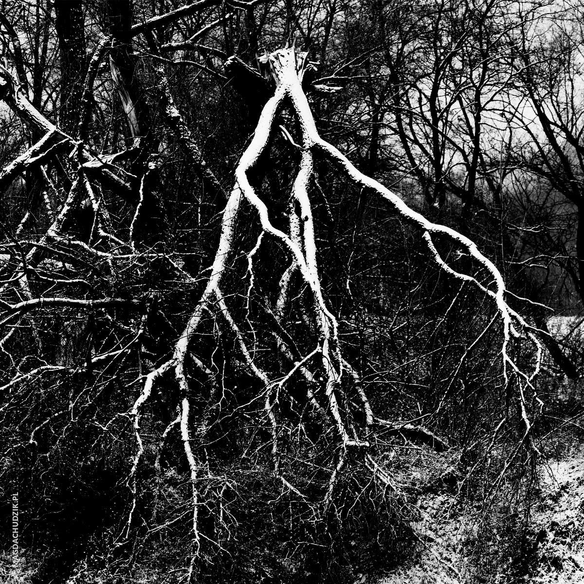 images_blog_drzewa-wisla-krakow_06